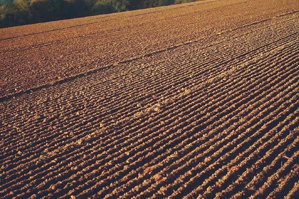 Pôda Peter Baco