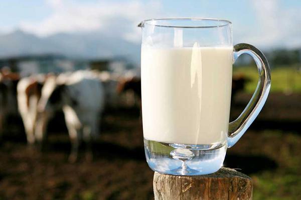 Produkcia mlieka