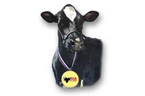 Slovenská Holsteinska Asociácia